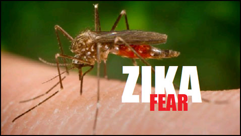 Zika Virus – When Mosquitoes affect the unborn child