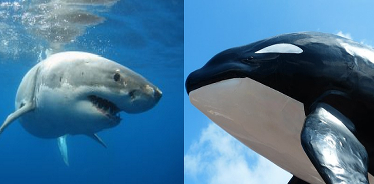 Shark versus Whale: who will win?